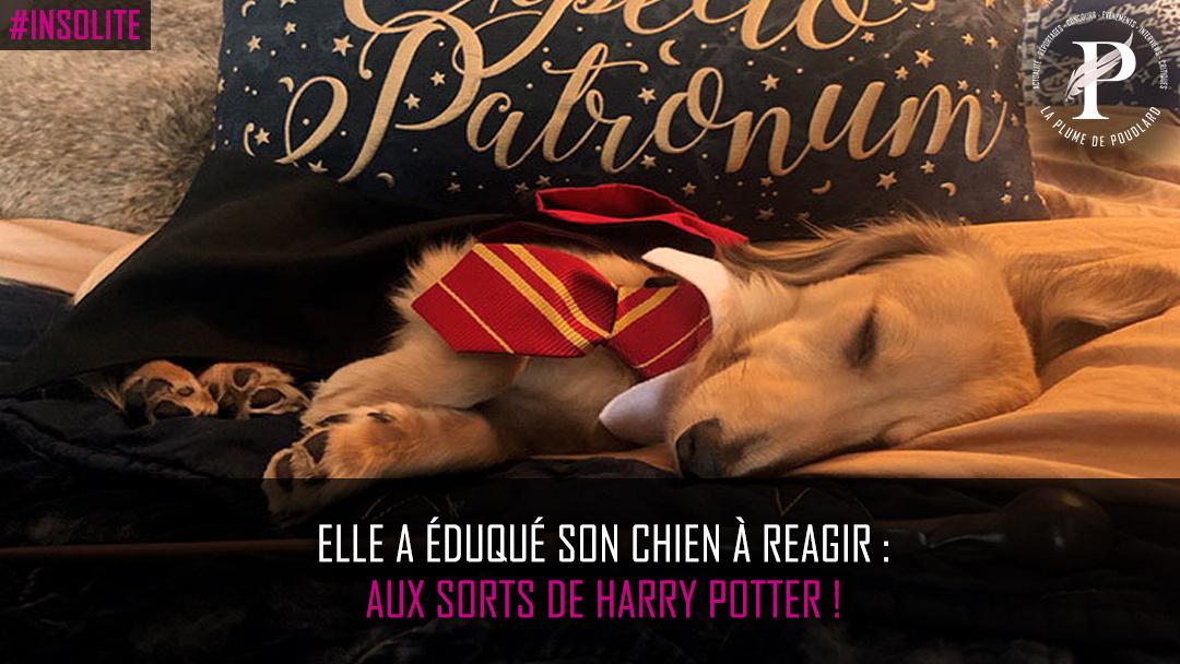 Il réagit aux sorts du monde d'Harry Potter